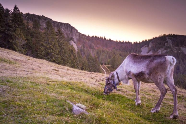 Dans les prés de la ferme aux rennes à Stosswihr - ©lafermeauxrennes