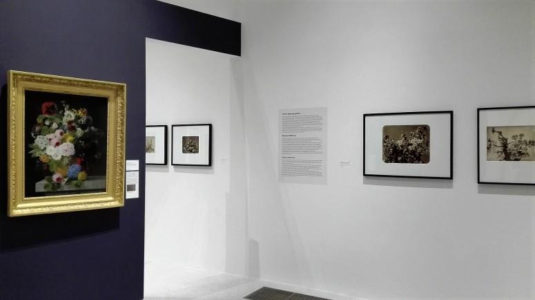 """Vue de l'exposition, """"Fleurs photographiées"""" - L'évasion photographie, Adolphe Braun - Musée Unterlinden Colmar"""